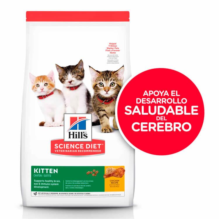 Hills SD Kitten