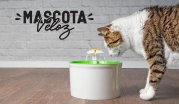 Día del Agua: ¡El agua también es importante para nuestras mascotas!