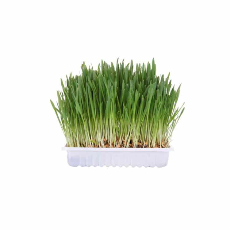 TRIXIE KIT DE GRASS PARA GATOS MASCOTA VELOZ